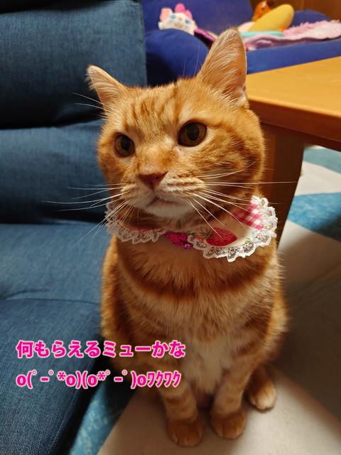 Happy BD miumiu2019-5.jpg